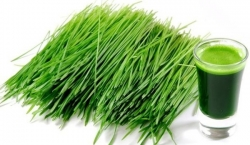 Mladý zelený ječmen [recenze]